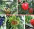 重庆云阳紫薇评估 砂仁评估 樱桃评估 梨树评估
