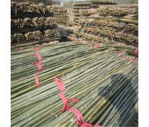 深圳菜架竹子 2.1-2.8米菜架竹批发#支撑豆角