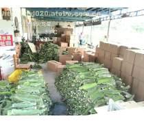 广州出售厄瓜多尔燕窝果苗