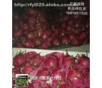广州哪里有新西兰黄皮红肉果苗种植