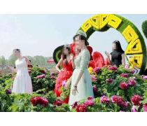 牡丹菊花展里放置的户外仿真牡丹菊花绿雕造型可定制