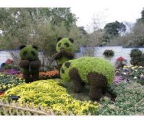 憨厚的仿真大熊猫绿雕造型批发 生猛有力的仿真公牛绿雕造型