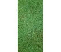 海南专业种植夏威夷草草皮基地 夏威夷草公司直销