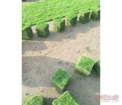 ��泥土/���|草坪/�_�巢萜やN售��