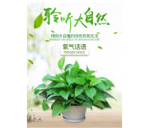 绿植 花卉 开业盆栽 办公室招财植物