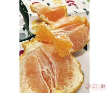 柑橘苗行情 柑橘基地 供应新品种大雅一号柑橘苗