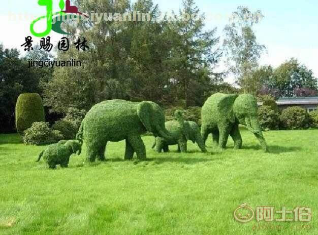 植物绿雕_鸡皮疙瘩绿血植物妖在线阅读_绿毛球 植物
