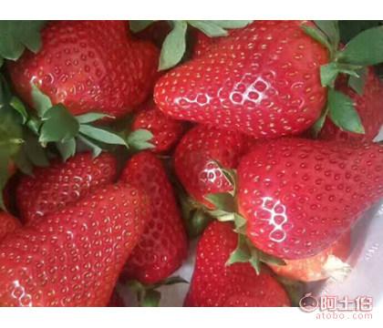 【山东奶油草莓苗、山东奶油草莓苗批发价格】-供应-黄页88网